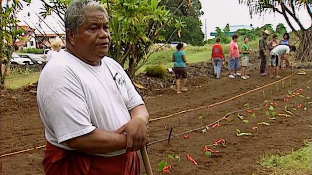 Mālama Hāloa - Protecting the Taro