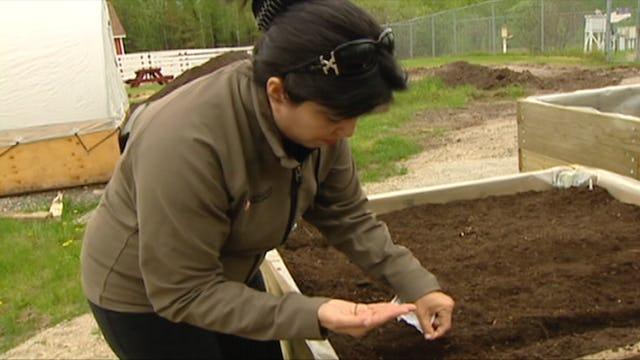 Vitality Gardening - Indigenous Farming