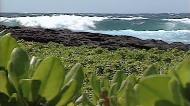 Kapu Kaʻū