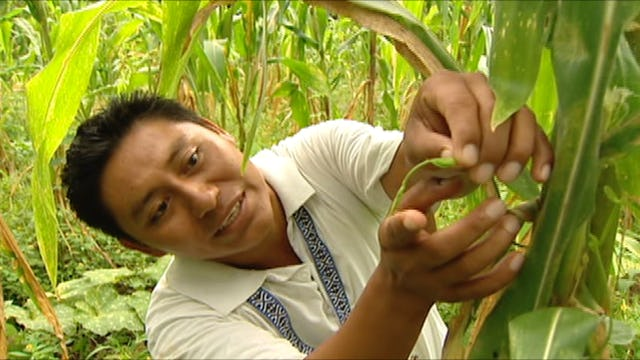 Vitality Gardening - Indigenous Gardening in Mexico
