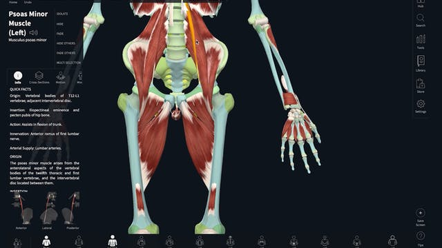 HIP & KNEE - MUSCLE FUNCTION BASED ON RANGE OF MOTION