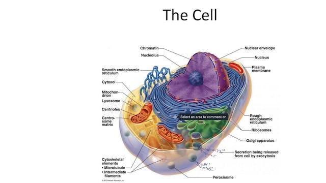 ANATOMY PART 1: CELLS & TISSUES