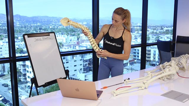 THE SPINE - MUSCLE FUNCTION  BASED ON ROM