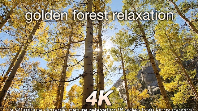 Golden Forest Relaxation 90 Minute Dynamic Nature Video