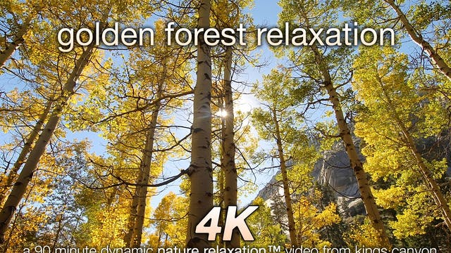 Golden Forest Relaxation 90 Minute Dy...