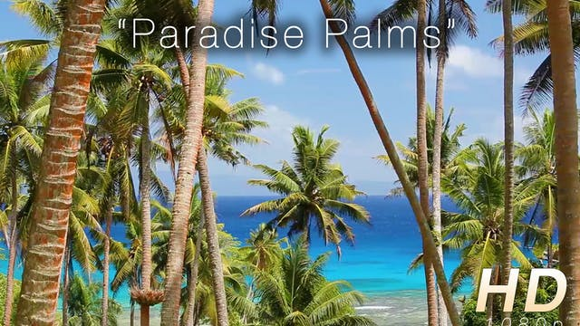 Paradise Palms 1 HR Static Nature Video