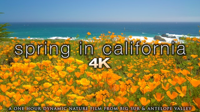 Spring in California 1 Hour Dynamic Nature Film - Big Sur & Antelope Valley 4K