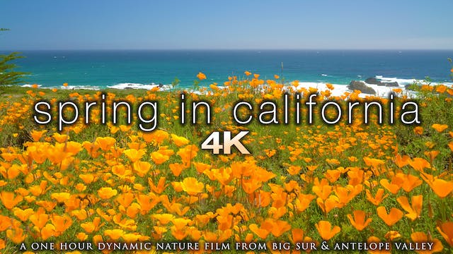 Spring in California 1 Hour Dynamic N...