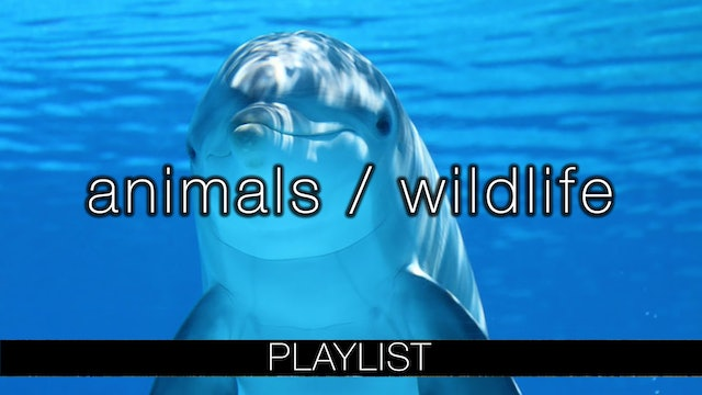 Animals/Wildlife Relaxation Films