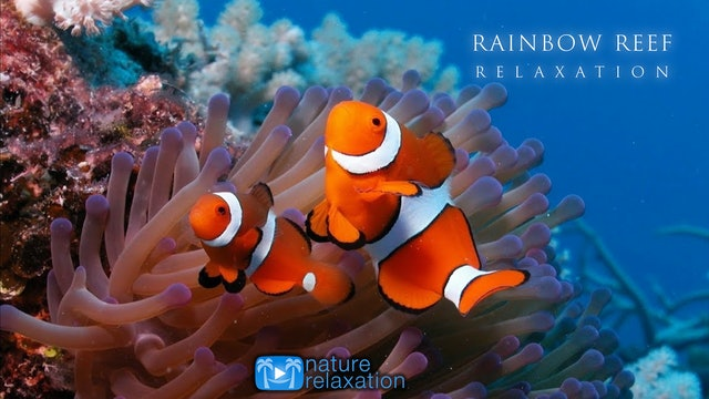 Rainbow Reef Relaxation +Music 3HR Dynamic Film