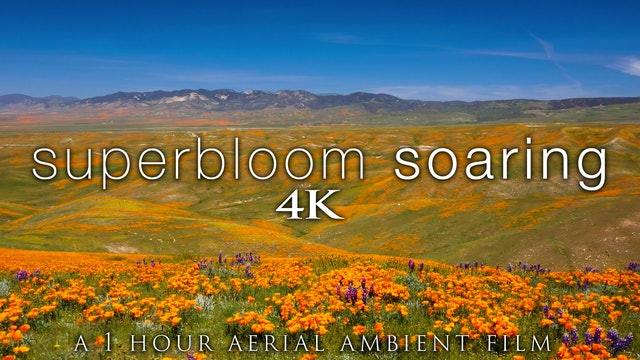 Superbloom Soaring 1HR Aerial Ambient Film + Music - California Spring