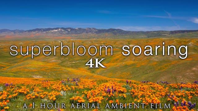 Superbloom Soaring 1HR Aerial Ambient...