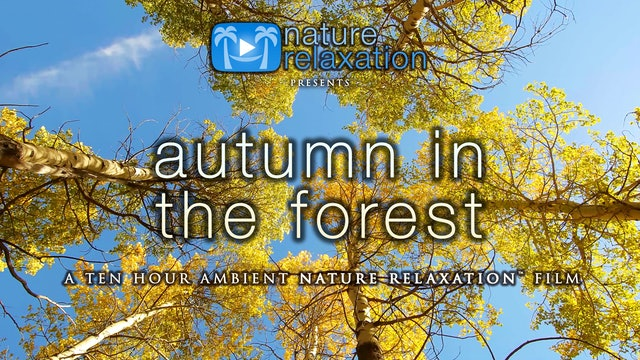 10HRs of Autumn in the Forest - Nature Sounds Only