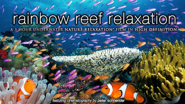 Rainbow Reef Relaxation (No Music) 3HR Dynamic Underwater Film