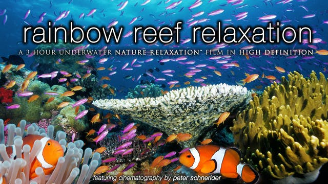Rainbow Reef Relaxation (No Music) 3H...