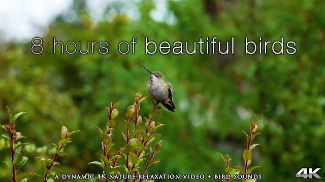 8 Hours of Beautiful Birds (No Music) Dynamic Nature Video