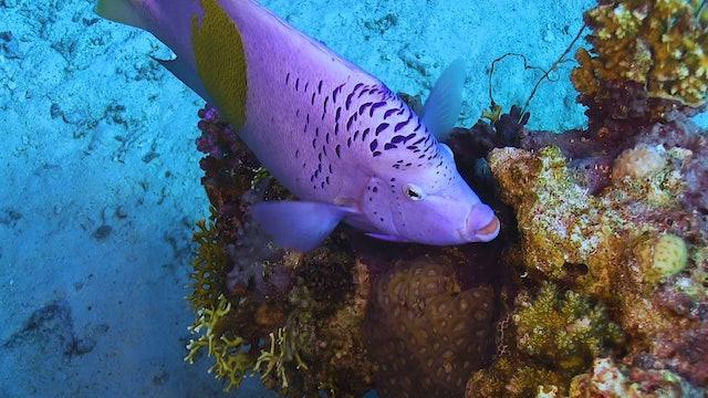 Underwater Wonders (4K UHD Version) 2 Hour Underwater Film