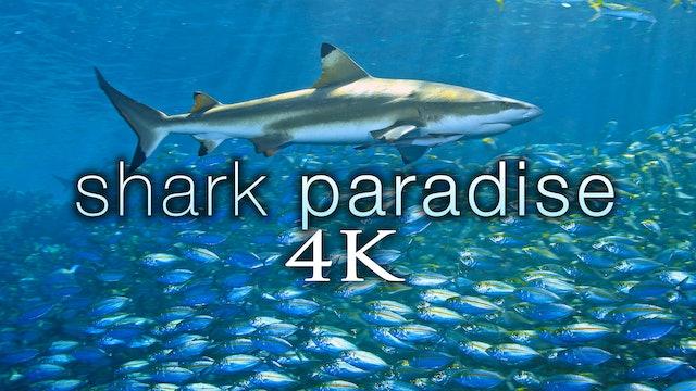 Shark Paradise 1.3 HR Underwater Film + Music in 4K