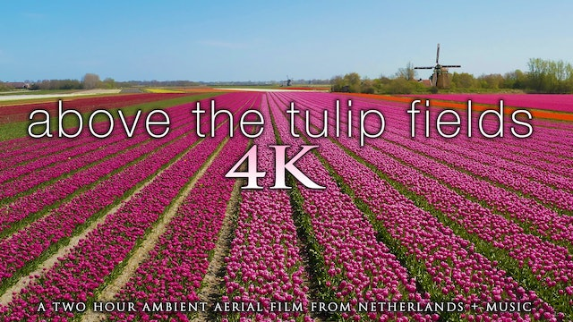 Above the Tulip Fields 2 Hour Aerial Drone Film + Music - Netherlands 2020 (4K)