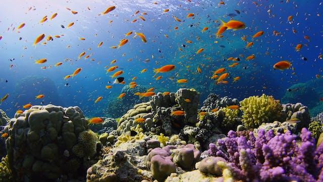 Underwater Wonders (2 HR 4K Version) ...
