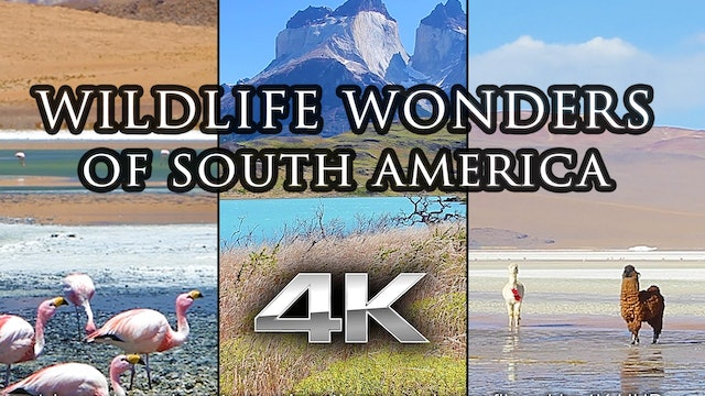 Wildlife Wonders South America 1 HR Dynamic Nature Video Epxerience