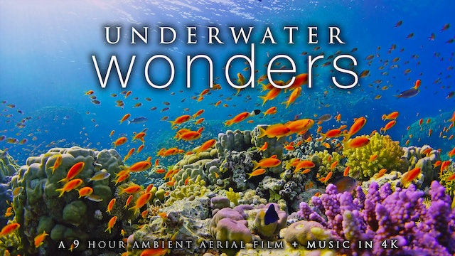 Underwater Wonders 9 HR Dynamic Film + Music filmed in 4K