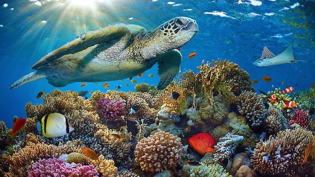 Rainbow Reef Relaxation II: An Ambien...