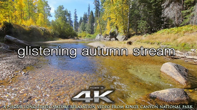 Glistening Autumn Stream 1HR Static Nature Relaxation 4K