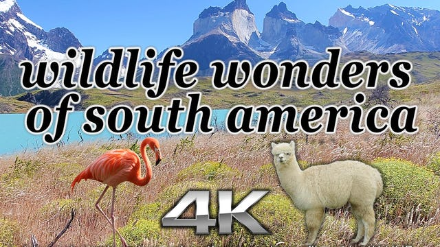 Wildlife Wonders South America (Just Nature Sounds)