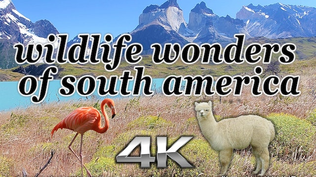 Wildlife Wonders South America (Just ...