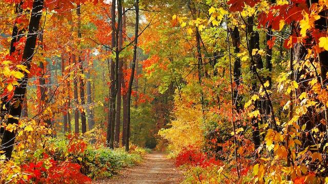 Enchanting Autumn (+Music) 9 HOUR Ver...