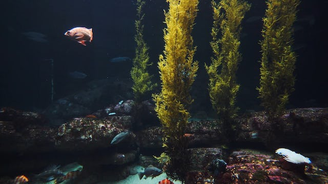 Deep Ocean Aquarium 1HR 4k Nature Relaxation Scene