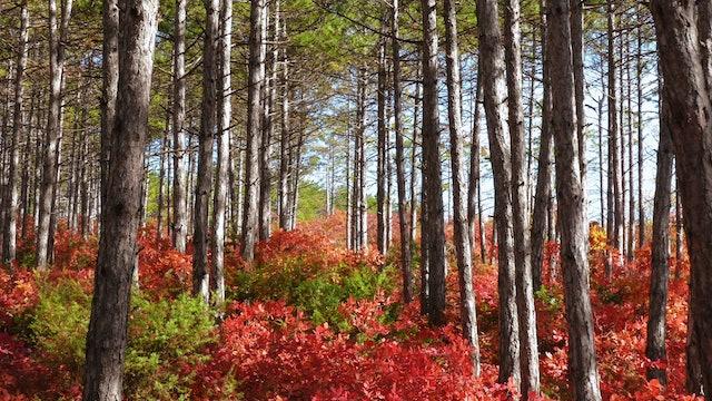 Enchanting Autumn Nature Relaxation 1HR Nature Sounds 4K