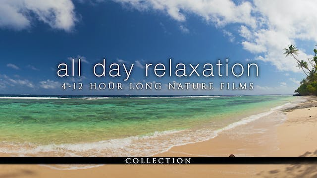 All-Day Relaxation (4-12 Hour Nature Films)