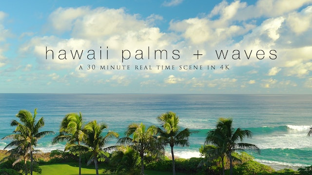 Hawaii Coastal Palms & Waves - 30 MIN Real Time Nature Scene in 4K UHD