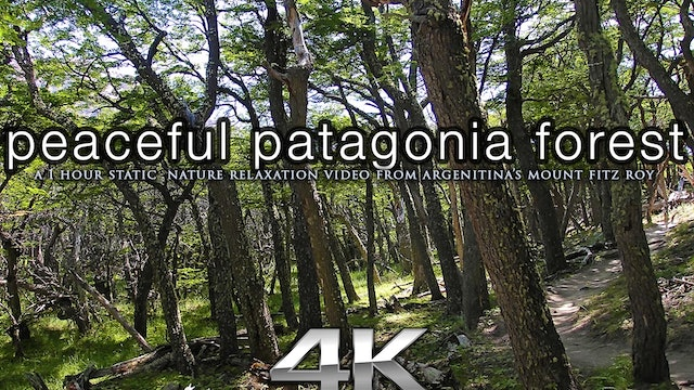 Peaceful Patagonia Forest 1 HR Static Scene in 4K