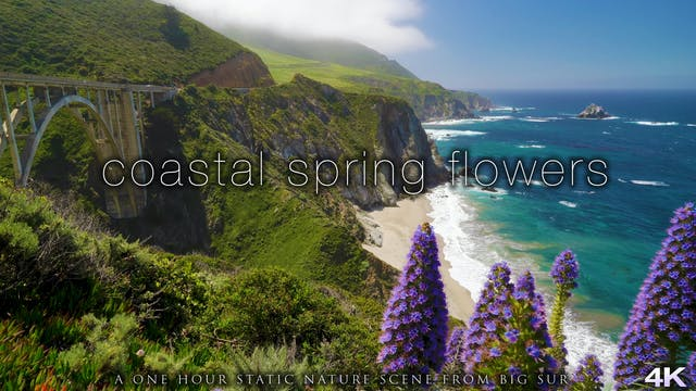 Coastal Spring Flowers Big Sur 1 Hour...