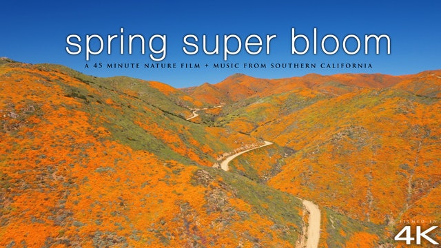 Spring Super Bloom in 4K - Southern California 45 Min Nature Relaxation™ + Music