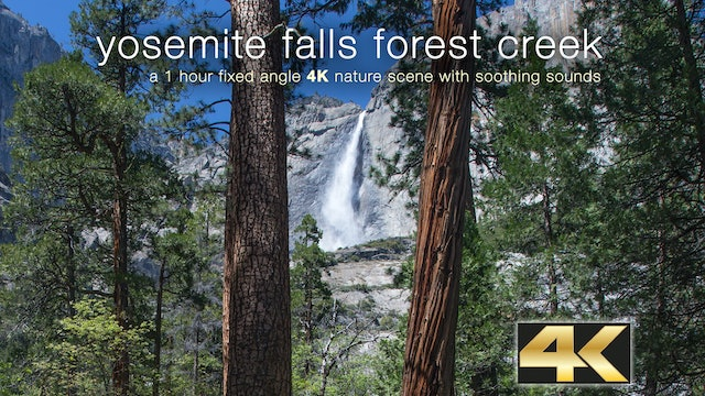 Yosemite Falls Forest Creek 1HR Static Nature Vid