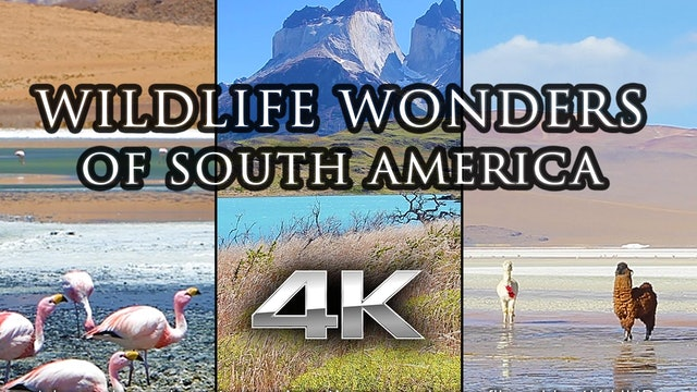 Wildlife Wonders South America 1 HR Dynamic Nature Film (With Music)