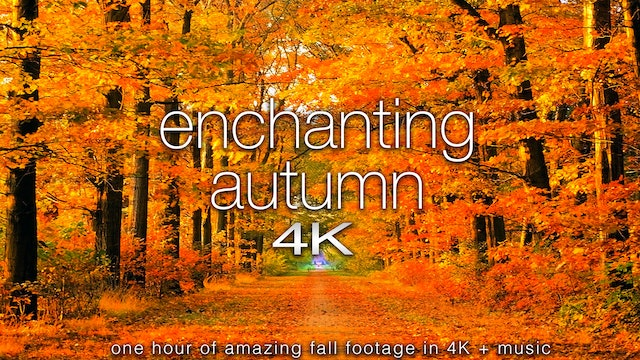 Enchanting Autumn 1 Hour Dynamic Nature Film + Music in 4K UHD