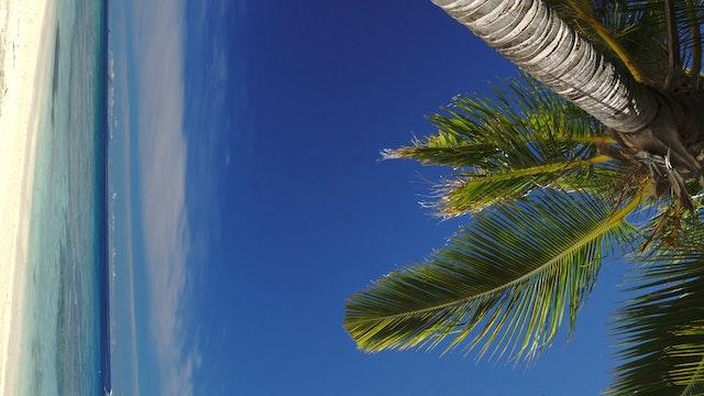 Vertical Palm Vista 1HR Nature Relaxa...