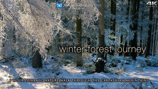 Winter Forest Journey (+ Music) 1HR Dynamic Film Shot in 4K - Carpathian Mountains