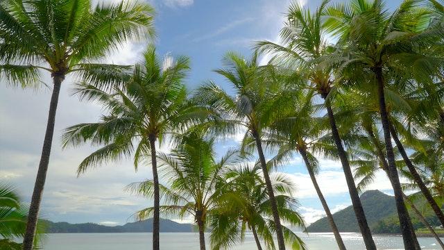 Palm Vista 1HR Static Scene in 4K - Hamilton Island, Australia