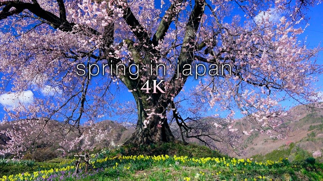 Spring in Japan (+Music) 4K 1HR Nature Relaxation Film