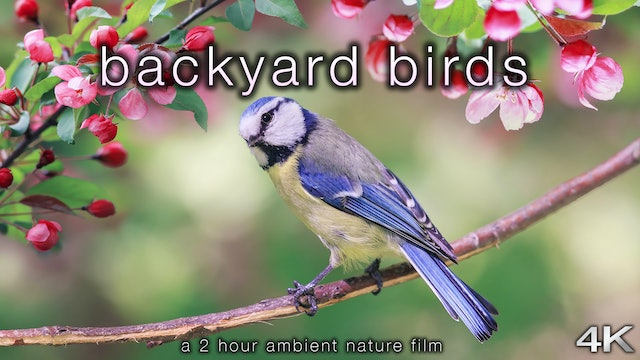 Backyard Birds 2 Hour Dynamic Nature Film in 4K