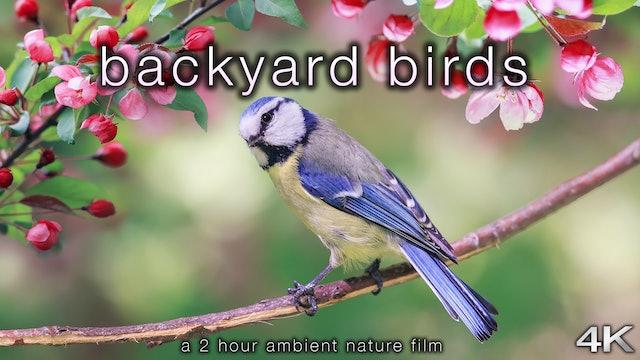 Backyard Birds 2 Hour Dynamic Nature Film in 4K