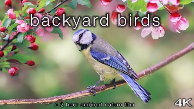 Backyard Birds 2 Hour Dynamic Nature ...