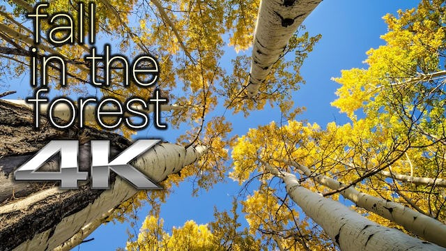 Fall in the Forest 2 HR Dynamic Nature Relaxation Video