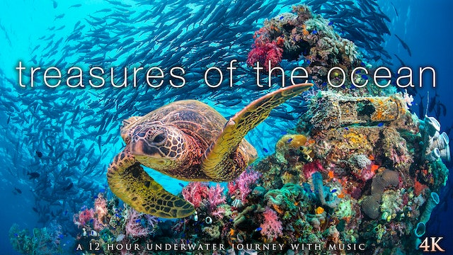 Treasures of the Ocean 12 Hour Underwater Nature Relaxation Film